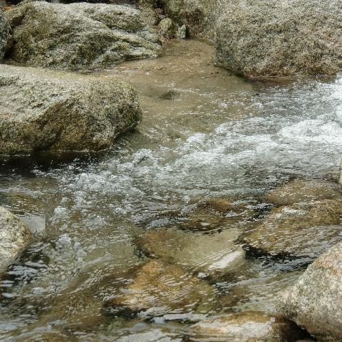 オオヤマカワゲラ 幼虫は流れゆるい渓流の石の下などに生息